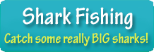 Fishing Charters Shark Fishing